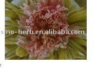 Carnation immortal peach blooming tea