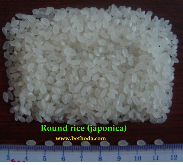 Vietnamese Round White Rice 5%(Japonica)