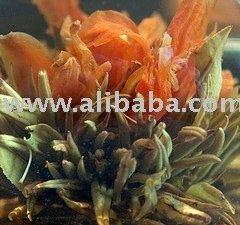 Orients Best Blooming Tea