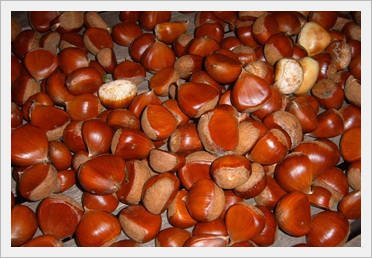 chestnut muslim What is the meaning of chestnut how popular is the baby name chestnut learn the origin and popularity plus how to pronounce chestnut.