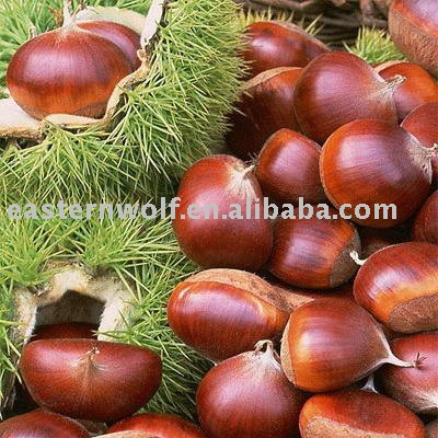 Chinese big chestnut in 25kg gunny bag package