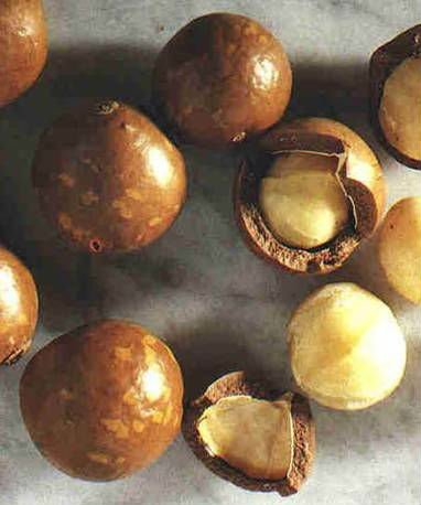 how to grow macadamia nuts from seed