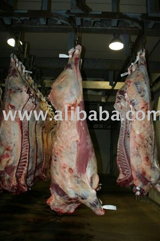 Halal Meat/Lamb Whole Carcass Exporting