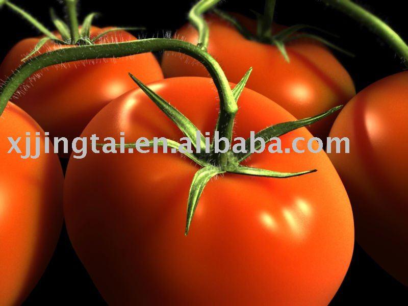 Aseptic tomato paste 30-32% Hot Break; 30-32% HB tomato paste in 220Liters Iron drum; 30-32% HB Toma