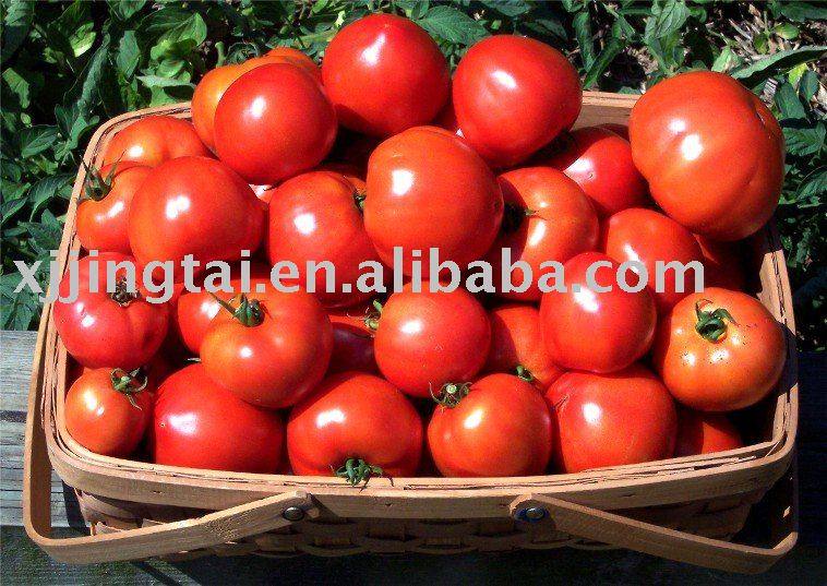 Tomato Paste 36-38%/30-32%/28-30% HB/CB, Both in can and in drum, with Aseptic package