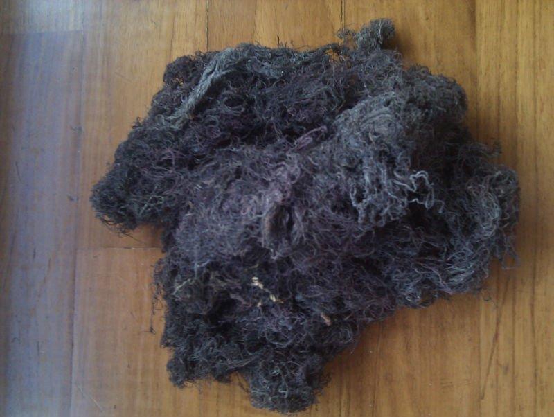 Gracillaria (Seaweed)