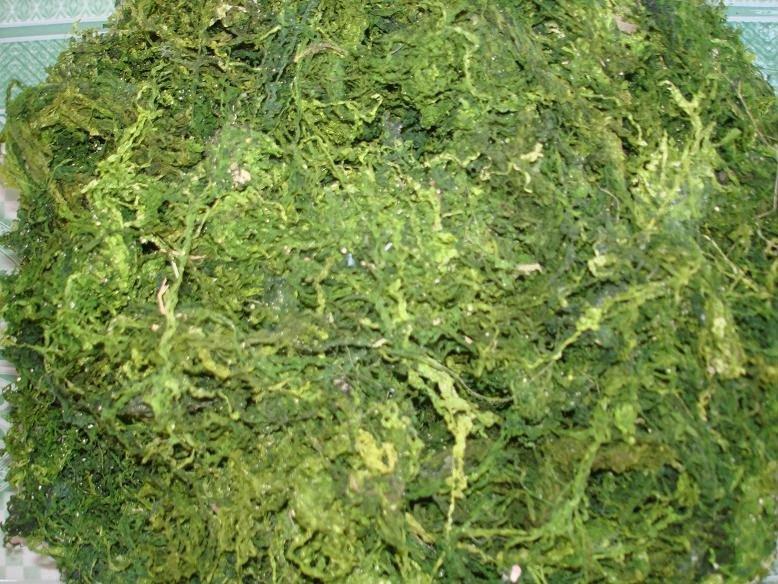 Ulva Lectuca Seaweed