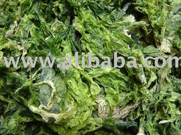 Ulva seaweed
