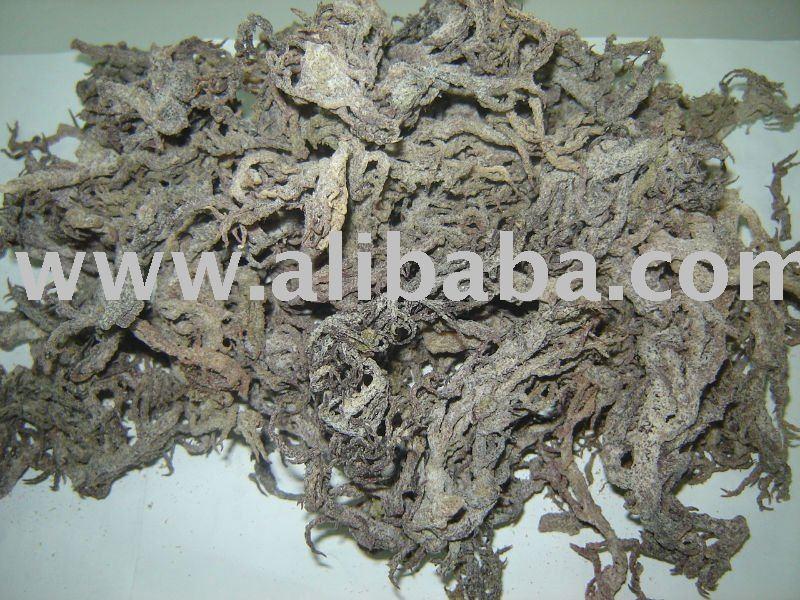 Eucheuma cottonii seaweed