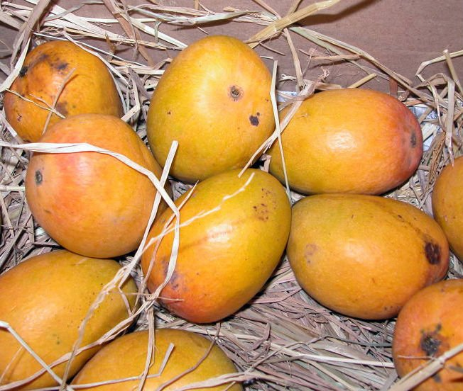 QUALITY ALPHONSO MANGOS FOR SALE