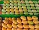 Philippines mango