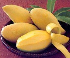 Canned Mango