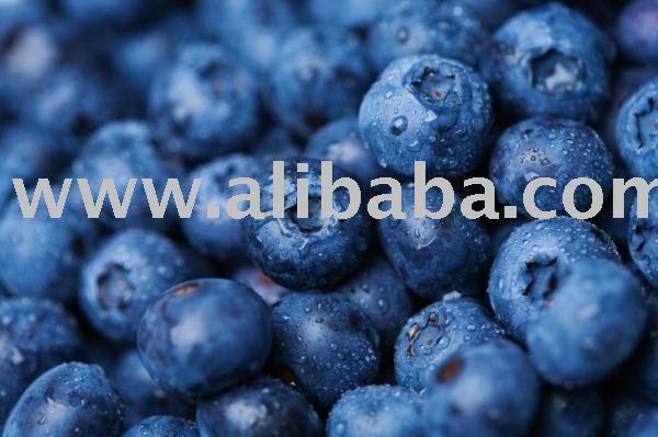 organic wild  blueberries vaccinium uliginosum