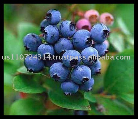 Blueberries Juice Concentrate