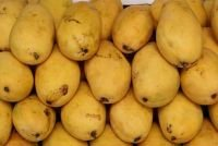 High Quality Mangoes