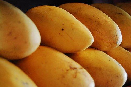 mango from mexico jalisco   mango manufactory