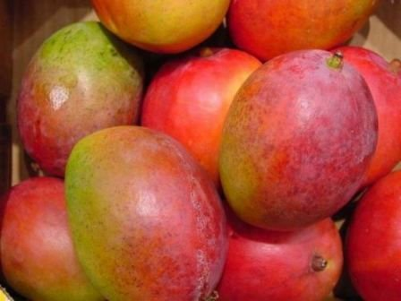 Quality kent mangoes