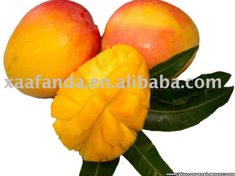 Mangue  juice powder