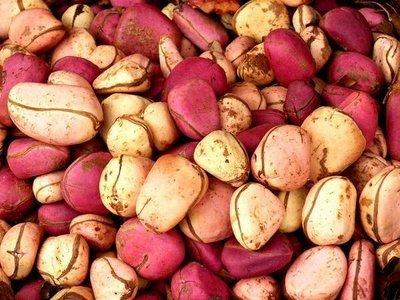 Fresh Kola Nuts. Fresh Cola nuts for sale