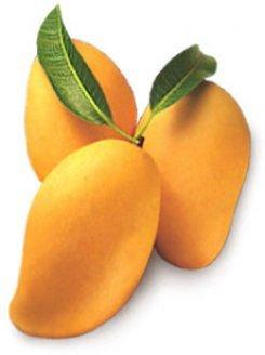 Premium Quality Fresh Mango Mangoe