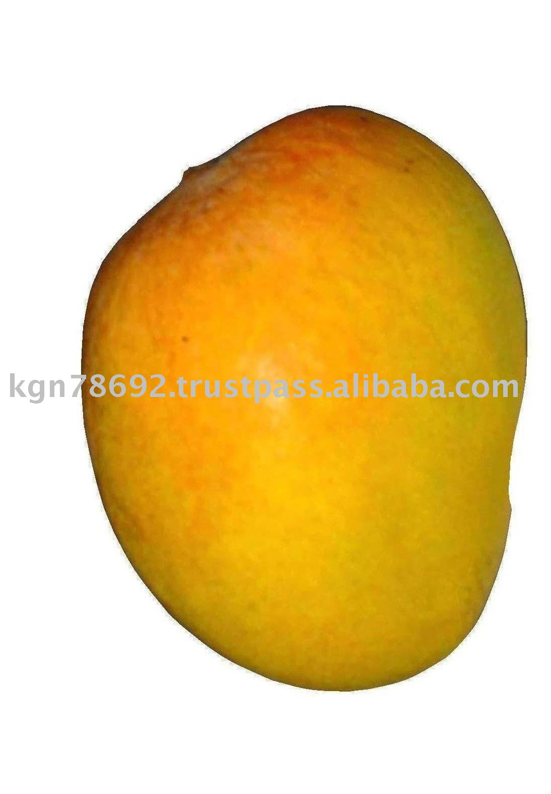 FRESH MANGO FRUITS