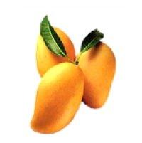 fresh mango & pulp & dried mango