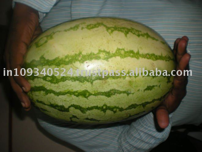 Red fleshed watermelons