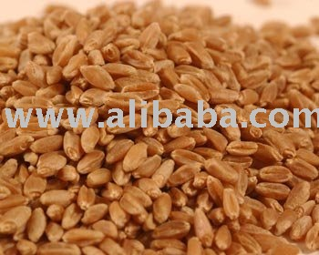 SPECIFICATION HARD RED WINTER WHEAT, GRADE 2 FOR BREAD: