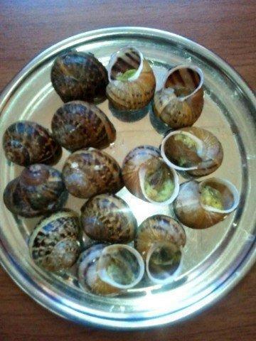 giant africa snails escargot helix aspersa muller caracol bover petit gris products germany. Black Bedroom Furniture Sets. Home Design Ideas