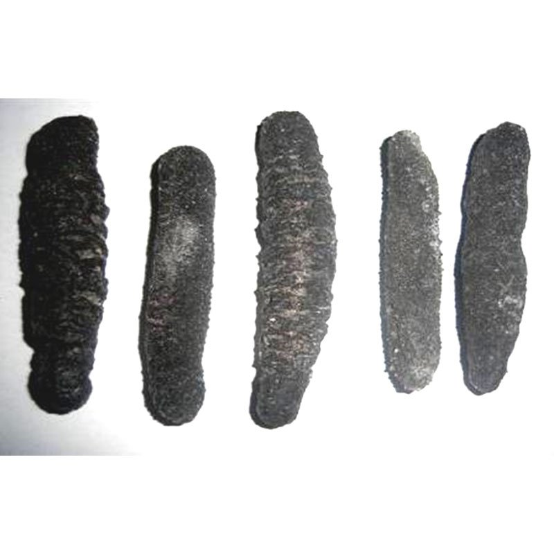 Dried Peruvian Black Sea Cucumber