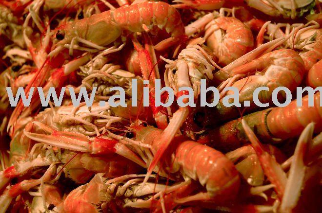 how to prepare fresh prawns