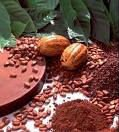 Arabica and Rubusta cocoa