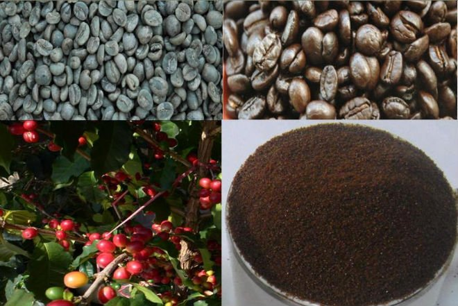 Excellent Arabica Coffee Beans