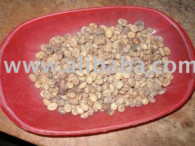 Luwak Coffee (Kopi Luwak)