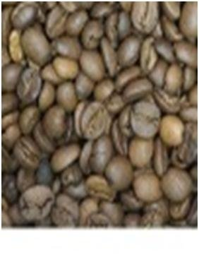Arabica coffee Seed