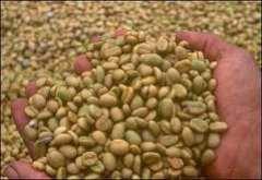ARABICA AND ROBUSTA GREEN COFFEE