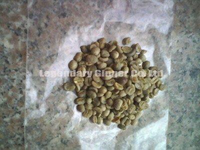 Yunnan coffee bean