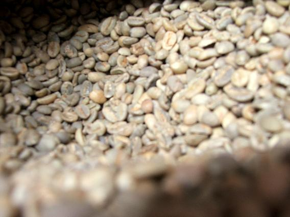 Green Organic Coffee Beans