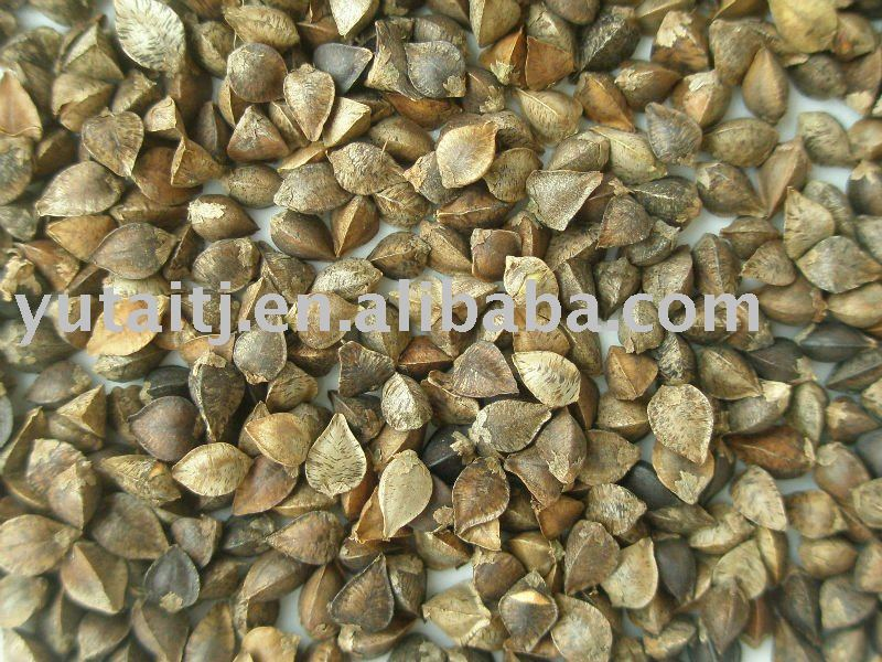 Buckwheat for bird feed
