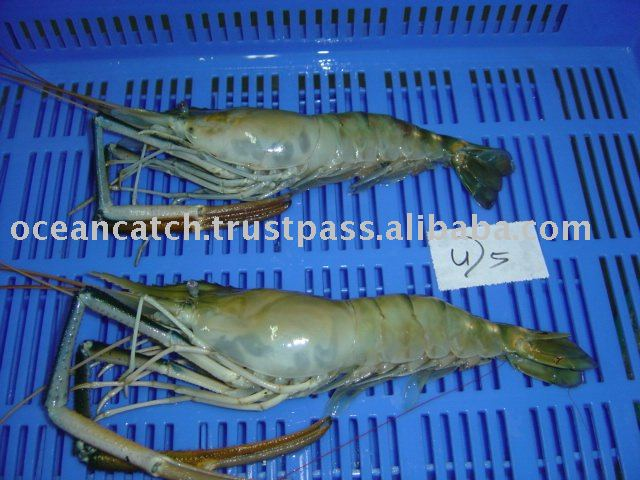 Scampi Headon  shrimp