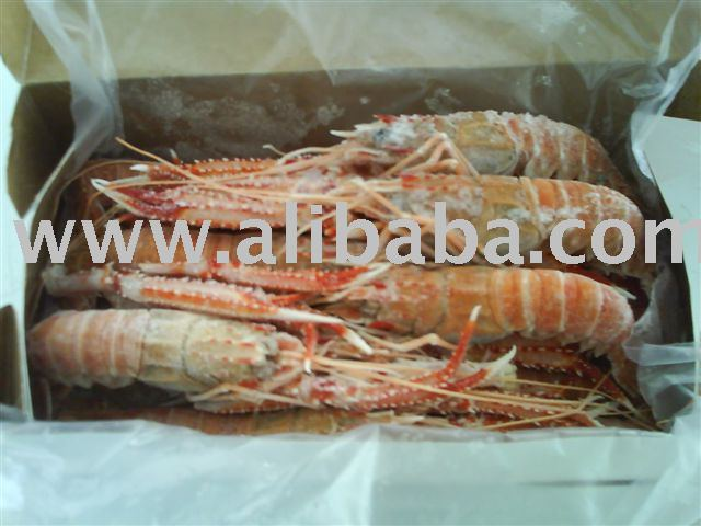 Frozen Scampi Shrimp-Metanephrops rubellus-origin Brazil