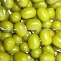 Green Mung Bean--Sprouting beans