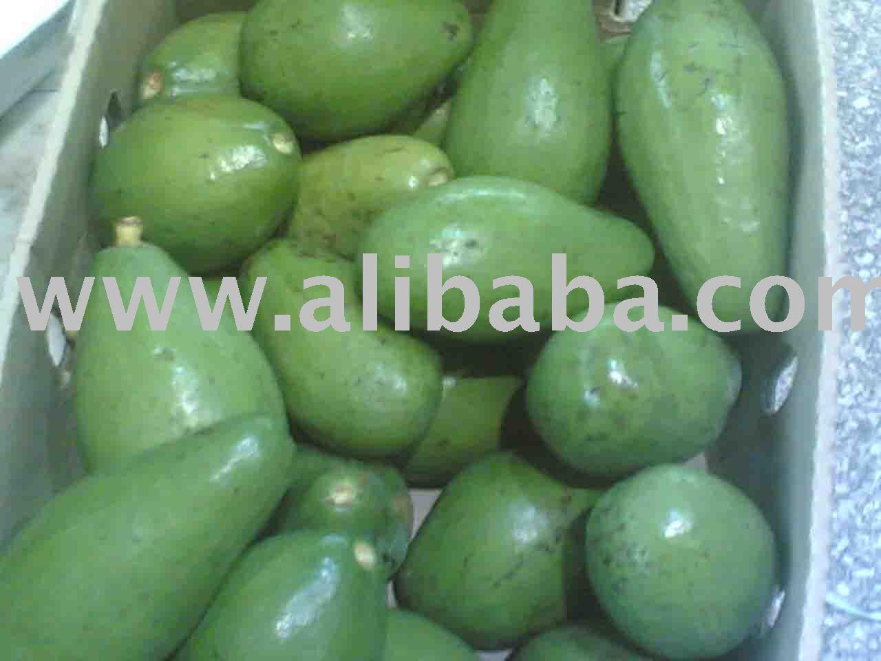 AVOCADO products,Uganda AVOCADO supplier