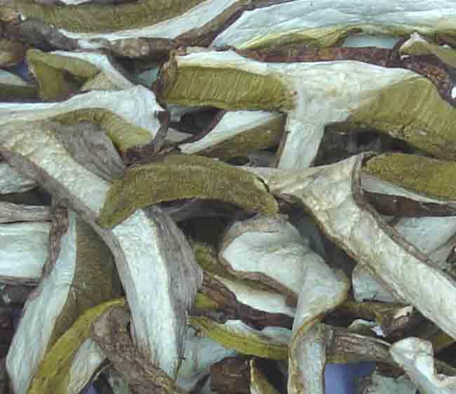 Mushrooms : Boletus Edulis