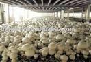 marinated mushrooms in oil