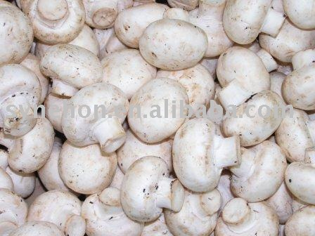 Edible Mushroom products,China Edible Mushroom supplier