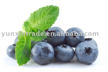 Natural Chinese Blueberry Extract/Anthocyanoside:10%-25%