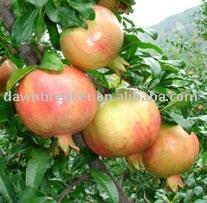 Pomegranate ( fresh pomegranate / sweet pomegranate )