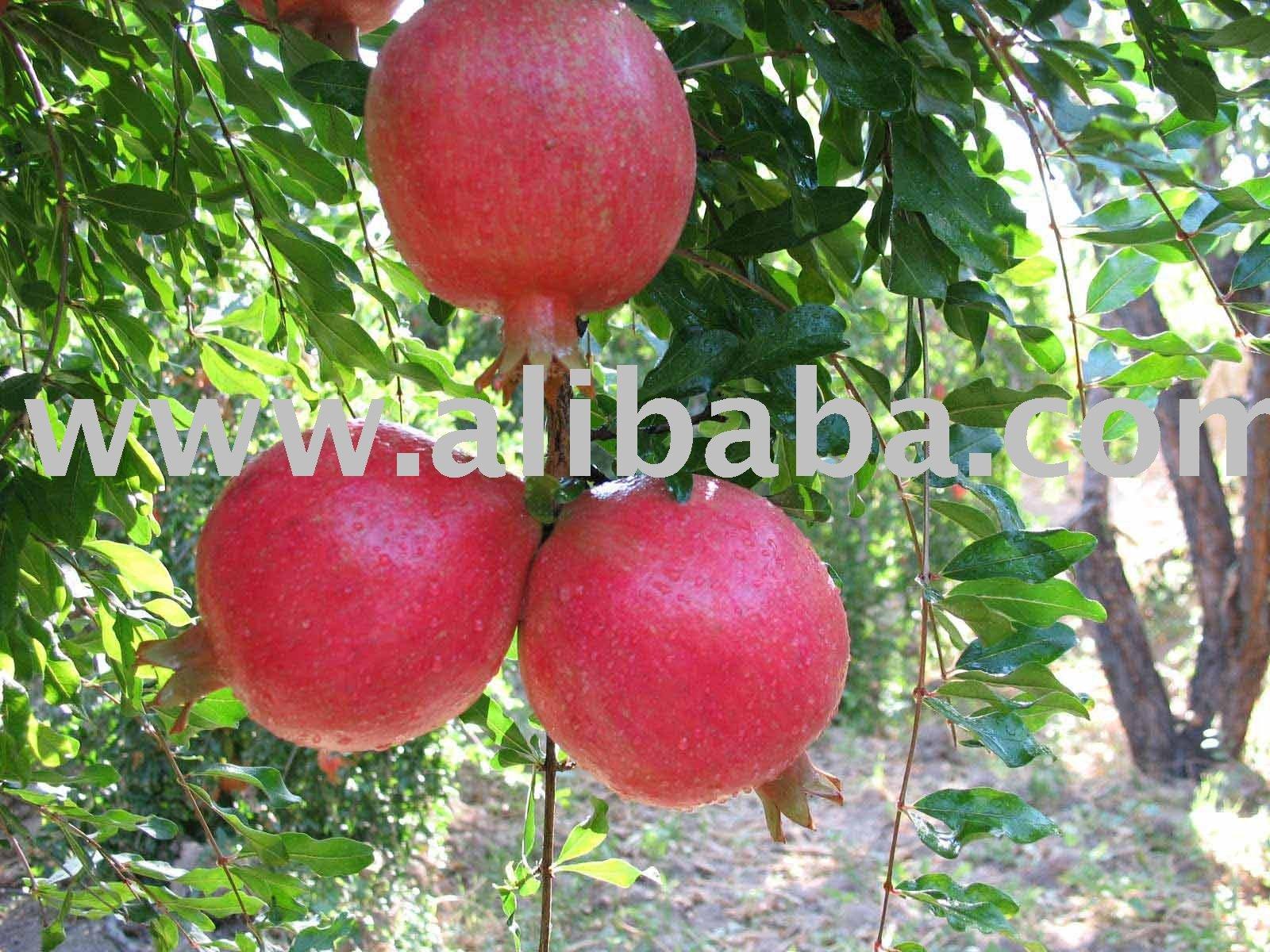 Pomegranate Diet Pills