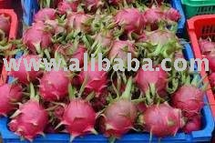 FRESH PREMIUM DRAGON FRUITS